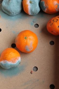 Mandarinen (2)